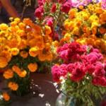 Precio Flores Día de Muertos