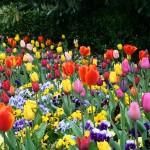 Precio de Flores